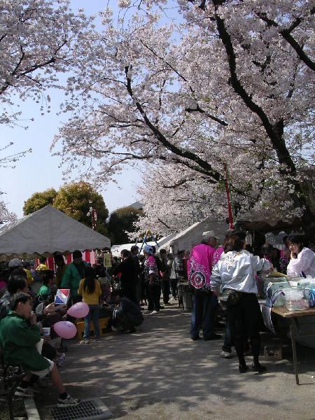 sakuramatsuri2040403.jpg